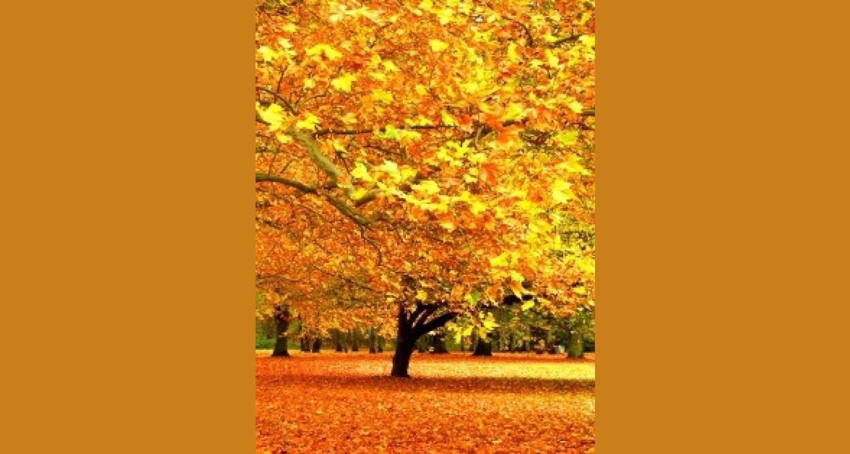 Сценарий внеклассного мероприятия «Листья, потихоньку облетая, устилают золотом траву…»