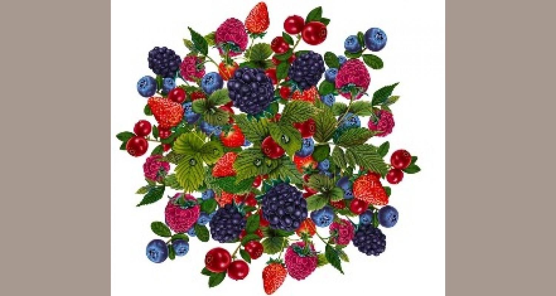 Конспект занятия по познавательному развитию детей старшего возраста с ОНР по теме «Садовые и лесные ягоды»