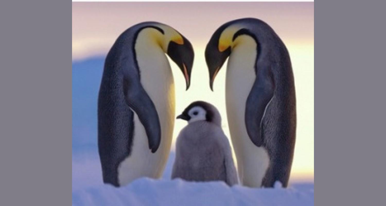 «Путешествие в Антарктиду»